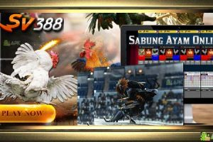 Link Alternatif Sv388 Sabung Ayam Terbaru » Situs Agen Daftar